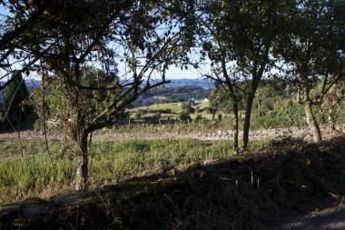 El Camino de Santiago_15
