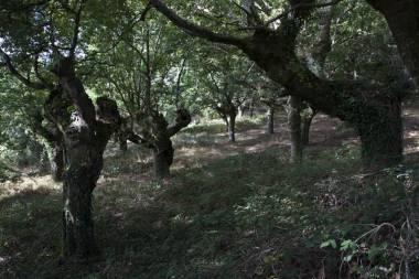 El Camino de Santiago_34