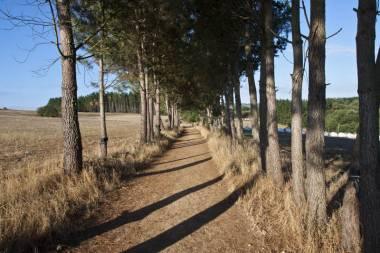 El Camino de Santiago_101