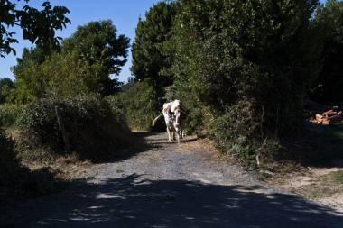 El Camino de Santiago_213