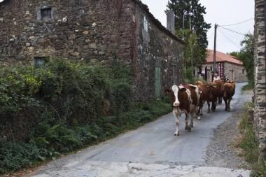 El Camino de Santiago_224